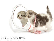 Купить «Котенок смотрит в зеркало», фото № 579825, снято 9 ноября 2008 г. (c) Cветлана Гладкова / Фотобанк Лори
