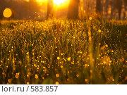 Купить «Роса на траве», фото № 583857, снято 21 мая 2005 г. (c) Алексей Корсаков / Фотобанк Лори