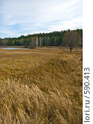 Купить «Осенний пейзаж», фото № 590413, снято 31 октября 2008 г. (c) Юрий Бельмесов / Фотобанк Лори