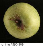 Купить «Зеленое яблоко», фото № 590809, снято 29 ноября 2008 г. (c) Vadim Tatarnitsev / Фотобанк Лори