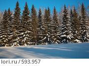Купить «Зимний лес», фото № 593957, снято 28 января 2008 г. (c) Serg Zastavkin / Фотобанк Лори
