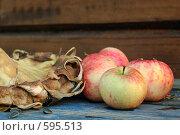Купить «Осенний урожай», фото № 595513, снято 16 августа 2007 г. (c) Игорь Бунцевич / Фотобанк Лори