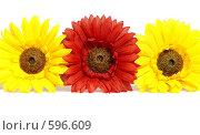 Искусственные цветы на белом фоне. Стоковое фото, фотограф Елена Нестерова / Фотобанк Лори