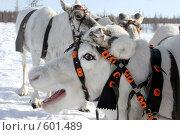 Олени. Стоковое фото, фотограф Александр Николаев / Фотобанк Лори
