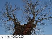 Купить «В небо», фото № 602025, снято 25 февраля 2007 г. (c) Игорь Бунцевич / Фотобанк Лори
