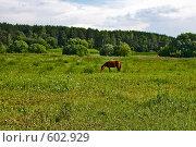 Купить «Лошадь в поле», эксклюзивное фото № 602929, снято 3 июля 2008 г. (c) Яна Королёва / Фотобанк Лори