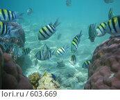 Купить «Подводный мир», фото № 603669, снято 23 октября 2008 г. (c) Юрий Жуков / Фотобанк Лори