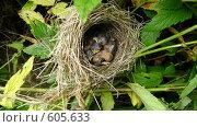 Купить «Гнездо с птенцами», фото № 605633, снято 1 июля 2008 г. (c) Туров Николай / Фотобанк Лори