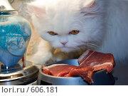 Купить «Белый хищник», фото № 606181, снято 7 декабря 2008 г. (c) Георгий Shpade / Фотобанк Лори