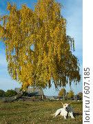 Собака под деревом. Осень. Стоковое фото, фотограф Александр Зайцев / Фотобанк Лори