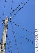 Купить «Птичьи посиделки», фото № 608417, снято 22 августа 2004 г. (c) Gagara / Фотобанк Лори