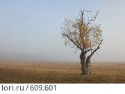 Одинокое дерево. Стоковое фото, фотограф Александр Зайцев / Фотобанк Лори