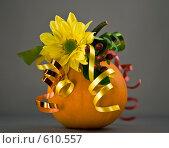 Купить «Тыква, подарок», фото № 610557, снято 16 сентября 2008 г. (c) Lina Kurbanovsky / Фотобанк Лори