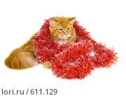 Купить «Рыжий кот породы мейн-кун в новогодней красной мишуре на белом фоне», фото № 611129, снято 23 ноября 2008 г. (c) Fro / Фотобанк Лори
