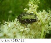 Купить «Зелёный жук в цветах», фото № 615125, снято 4 июля 2008 г. (c) Иванова Наталья / Фотобанк Лори