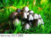 Грибы на зеленой траве. Стоковое фото, фотограф Володина Светлана / Фотобанк Лори