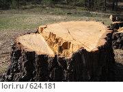 Купить «Большой пень», фото № 624181, снято 20 апреля 2008 г. (c) Вячеслав Рящиков / Фотобанк Лори
