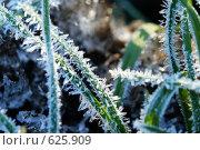 Купить «Зелёная трава, покрытая инеем», фото № 625909, снято 8 ноября 2008 г. (c) Сергей Пестерев / Фотобанк Лори