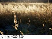 Купить «Осень. Трава в поле», фото № 625929, снято 8 ноября 2008 г. (c) Сергей Пестерев / Фотобанк Лори