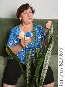 Купить «Уход за комнатными растениями», фото № 627677, снято 10 ноября 2008 г. (c) Татьяна Мельникова / Фотобанк Лори