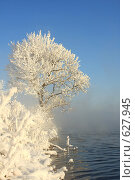 Купить «Берег», фото № 627945, снято 19 декабря 2008 г. (c) Зудин Виталий Владимирович / Фотобанк Лори