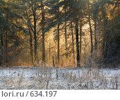 Лес в Суханово. Стоковое фото, фотограф Николай Корсунь / Фотобанк Лори
