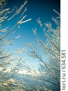Купить «Веточки», фото № 634581, снято 28 декабря 2008 г. (c) Андрей Доронченко / Фотобанк Лори