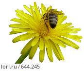 Цветок с пчелой. Стоковое фото, фотограф Андрей Марцинкевич / Фотобанк Лори