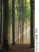 Купить «Туманное утро», фото № 648701, снято 21 сентября 2005 г. (c) Михаил Лавренов / Фотобанк Лори