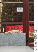 Спящий рыжий кот  на крыльце бизнес центра (2008 год). Редакционное фото, фотограф Яроцкий Андрей Петрович / Фотобанк Лори