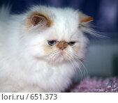 Купить «На выставке кошек», фото № 651373, снято 20 декабря 2008 г. (c) Виктор Филиппович Погонцев / Фотобанк Лори