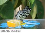 Бабочка. Стоковое фото, фотограф Чировова Екатерина Владиславовна / Фотобанк Лори