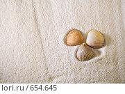 Ракушки. Стоковое фото, фотограф Смирнова Ирина / Фотобанк Лори