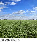 Купить «Весенее поле под голубым небом с живописными облаками», фото № 657177, снято 24 января 2020 г. (c) Вадим Кондратенков / Фотобанк Лори