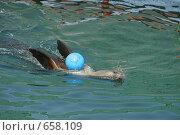 Морской котик. Стоковое фото, фотограф Дмитрий С. / Фотобанк Лори