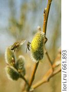 Купить «Весна пришла!», фото № 661893, снято 29 марта 2007 г. (c) Михаил Ушаков / Фотобанк Лори