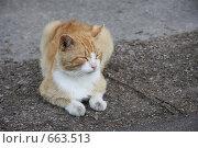 Дворовый рыжий кот. Стоковое фото, фотограф Лена Осадчая / Фотобанк Лори