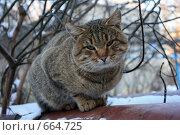 Купить «Упитанный полосатый кот сидит на трубе», фото № 664725, снято 4 января 2009 г. (c) Яна Королёва / Фотобанк Лори
