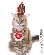 Купить «Кошка в короне и с сердечком-валентинкой», фото № 669889, снято 22 января 2009 г. (c) Вячеслав Жуковский / Фотобанк Лори