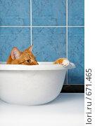 Купить «Кот в тазу», фото № 671465, снято 31 августа 2008 г. (c) Raev Denis / Фотобанк Лори