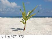 Растение на пляже. Стоковое фото, фотограф Вячеслав Москалев / Фотобанк Лори