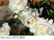 Цветы. Стоковое фото, фотограф Никита Савин / Фотобанк Лори