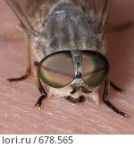 Купить «Слепень на ноге кусает», фото № 678565, снято 23 июля 2007 г. (c) Андрей Ильин / Фотобанк Лори
