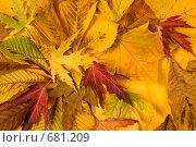 Осенние листья. Стоковое фото, фотограф Андрей Чмелёв / Фотобанк Лори