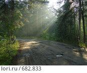 Вечерний туман на лесной дороге. Стоковое фото, фотограф Антон Серохвостов / Фотобанк Лори