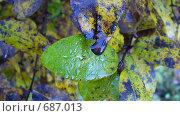 Купить «Листья», фото № 687013, снято 24 сентября 2006 г. (c) тб / Фотобанк Лори