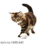Котенок. Стоковое фото, фотограф Бутинова Елена / Фотобанк Лори