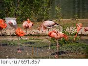 Купить «Фламинго», фото № 691857, снято 17 мая 2008 г. (c) Eduard Panov / Фотобанк Лори