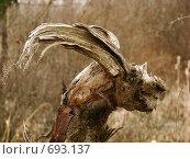 Природные формы. Стоковое фото, фотограф Максим Сидоров / Фотобанк Лори