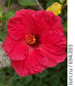 Купить «Южный цветок», эксклюзивное фото № 694093, снято 7 августа 2007 г. (c) Михаил Карташов / Фотобанк Лори